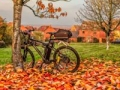 e-Biking in Autumn